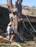 Tree-removal-4.jpg