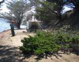Tree-removal-5.jpg