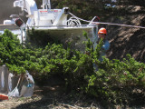 Tree-removal-6.jpg