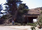Tree-removal-7.jpg