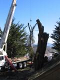 Tree-removal-10.jpg