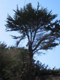 Tree-removal-11.jpg