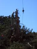 Tree-removal-12.jpg