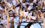 Late Snow - Much Needed Moisture