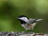 Holly Lake Birds