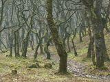 Exmoor badgeworthy woods
