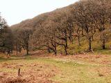 Exmoor woods