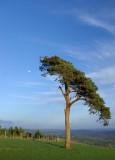 Raddon tree and moon