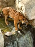 Fort Worth Zoo Photos