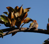 Varenna Bird 1-1.jpg