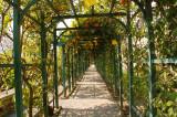 Villa Carlotta Citrus bower 1.jpg