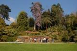 Villa Carlotta Giant Wisteria 2.jpg
