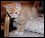 Kitten Gem