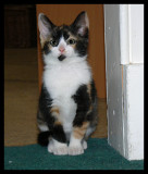 Kitten Mia