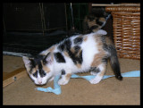 Lily's got the ribbon