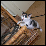 Lily up to no good with the wood basket.