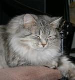 Izzi in December 2006