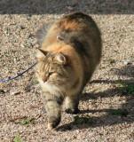 Roosa & Hertta - Siberian Cats