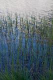 Merced Lake 3