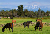 128 Mount Jefferson horses 6.jpg
