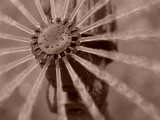 Sony 145 - What is it?Eligible - 6th PlaceSepia Daisy