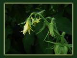Sony 149HobbiesWatching the Garden Grow