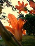 Orange Treasure ~ July 14th