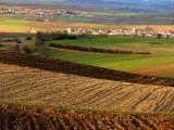 Alsatian patchwork