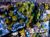 mousse et lichen.