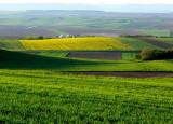 Alsace - fields