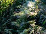 les herbes folles.