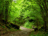 the forest path.