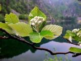lac blanc - Vosges.