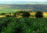 alsatian fields