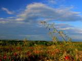 le champ de céréales.