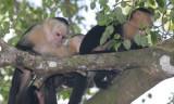 Capucin Monkeys.jpg