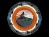 Surfing In A Circle