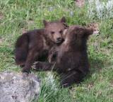 2 cubs YELS2169.JPG