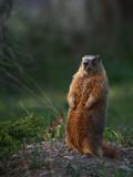 Marmott IMG_1327.jpg