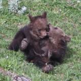 cubs YELS2148.JPG