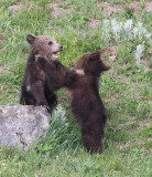 cubs YELS2211.JPG