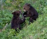 cubs playing YELS2444.jpg