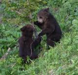 cubs playing dpp YELS2445.JPG