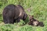 mother with 2 cubs YELS2249.JPG