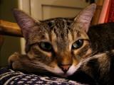 Sultan the cat :)