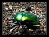 Nasty green thingie :)