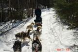 dog sledding with yves
