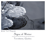 Signs of Winter ...