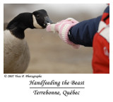 Handfeeding the beast ...