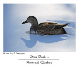 Snow Duck ...